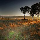 Rural Sunrise by Murray Swift