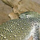 Nile Monitor by Bonnie Pelton