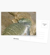 Nile Monitor Postcards