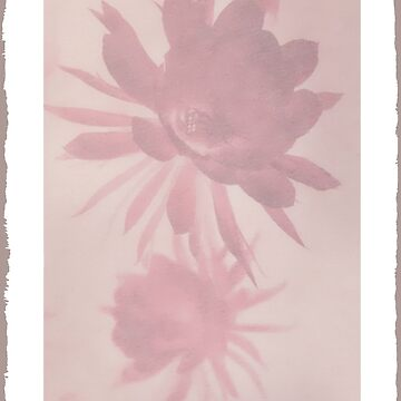 Negative Flower by Dream-Coat