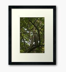 Watchful Eye - Great Blue Heron Framed Print
