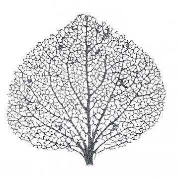 Leaf Skeleton by artbyjanelucas