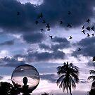 Birds at sunset  by Darren Newbery