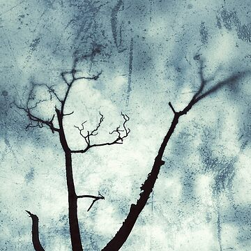 Old dry tree and a cloudy sky by Yomanow