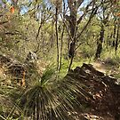 Ku-ring-gai Chase National Park  by jayview