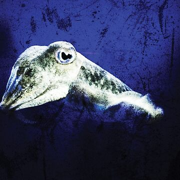 Squid, blue grunge background	 by Yomanow