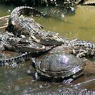 turtle with alligators by Sheila McCrea