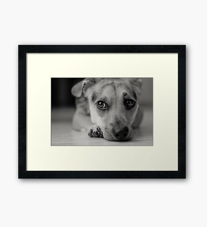 puppy's serious life Framed Print