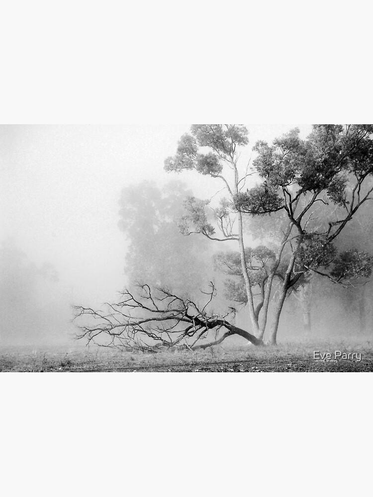 Misty Paddock by AdamsWife