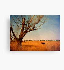 Cattle Country - Uralla, Northern Tablelands, NSW, Australia Metal Print