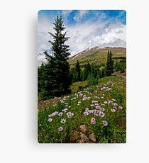 Colorado Backcountry Canvas Print
