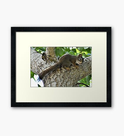 Please! Don't Shoot! Framed Print