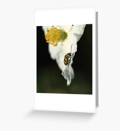 The Little Yellow Bug Greeting Card