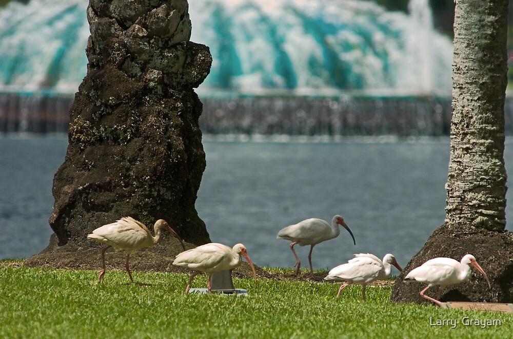 Lake Eola Ibis by Larry  Grayam