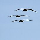 Pelicans in formation by Larry  Grayam