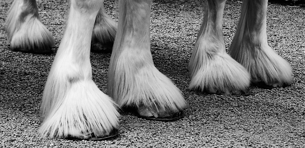 feathered feet by Clare McClelland
