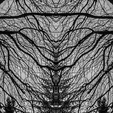 Abstract branches by Nino33