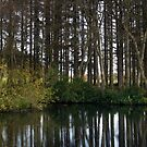 aden country park lake by codaimages