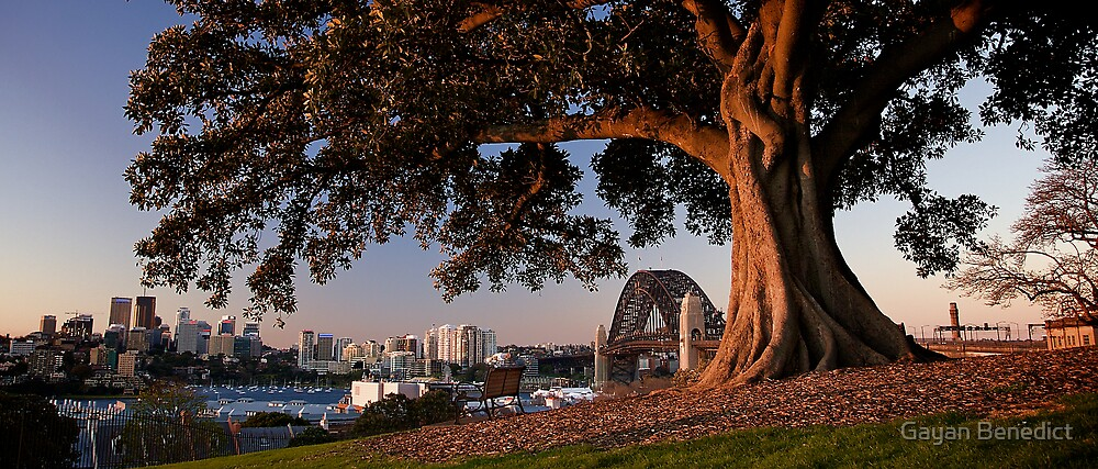 The Sydney Harbour Bridge from Observatory Hill, August 2009 by Gayan Benedict