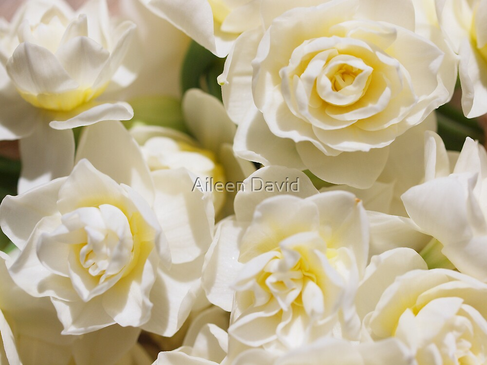 Serenity in White by Aileen David