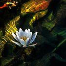 Okavango Lily by Sharon Bishop