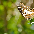 Tailed Emporer Butterfly by NaturalCultural