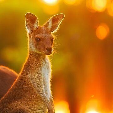 Sunset Joey, Yanchep National Park by MADCAT