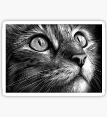 Cat's face - scratchboard art Sticker
