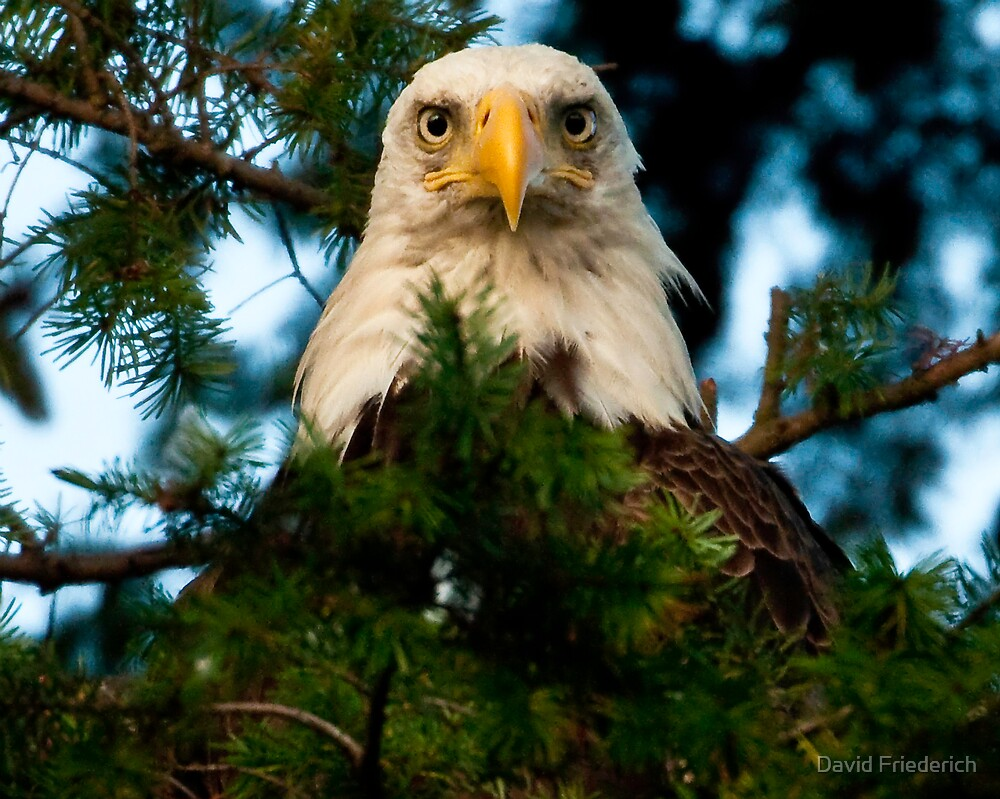 A Proud Mother by David Friederich