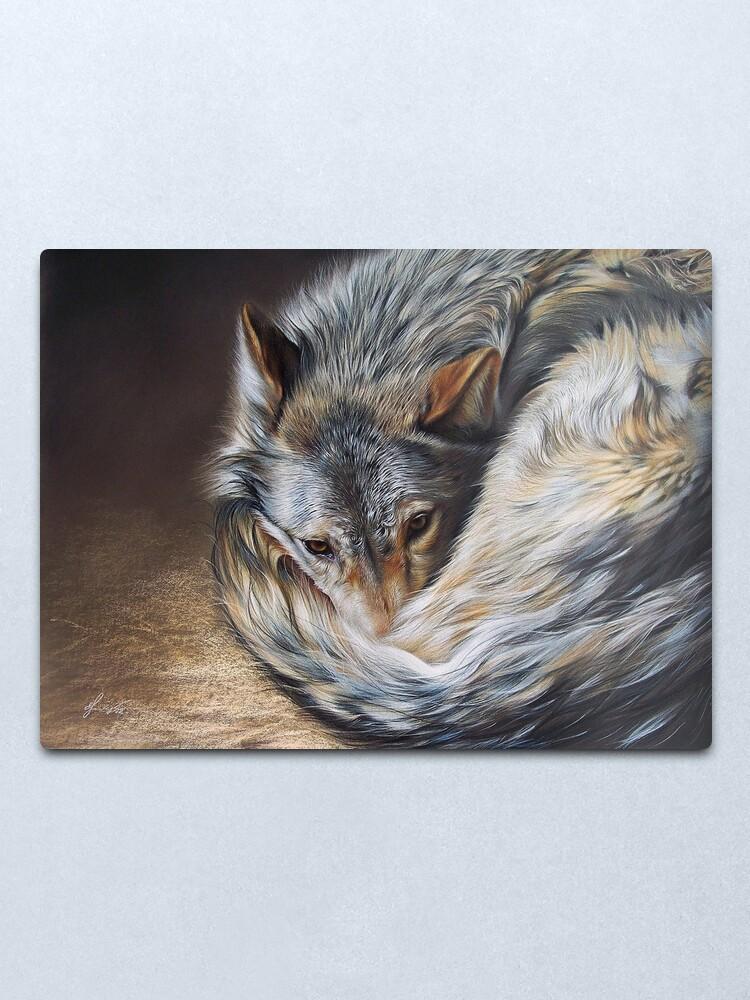 Alternate view of Watchful rest (Grey Wolf) Metal Print