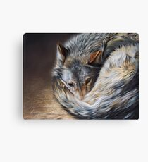 Watchful rest (Grey Wolf) Canvas Print