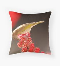 Brown honey eater on red flowers  Throw Pillow