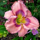 Trimmed in Purple by Sandra Fortier