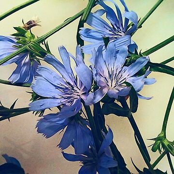 Blue Wildflower by bloomingvine