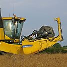 The Cutting Edge of Oil Seed Rape Harvest by Barrie Woodward
