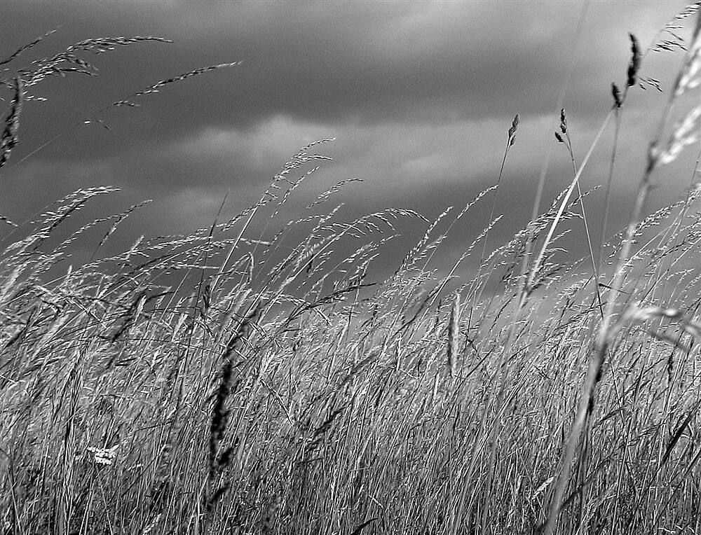 before the storm by christophm