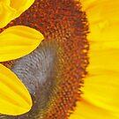 Sunflower Macro by Welshpixels