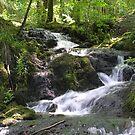 Waterfalls above Millerground, Windermere, Cumbria, English Lake District by Philip Mitchell
