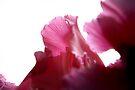 blush by Anthony Mancuso