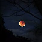 Blood Moon, Stars, Clouds by diggle