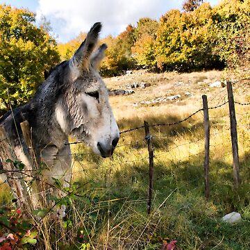 donkey by bonardelle