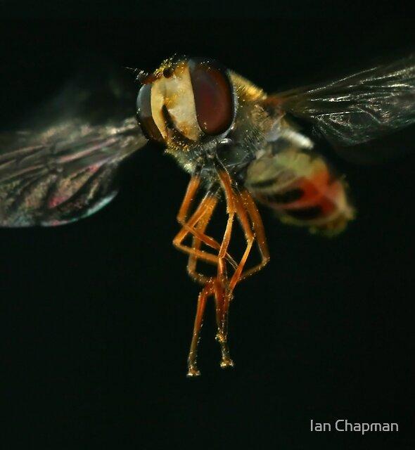 Mega Fly by Ian Chapman