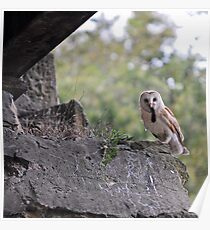 Barn Owl With Kill Poster