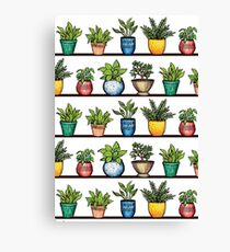 Houseplants Pattern - Colorful Potted Plants On Shelves Canvas Print