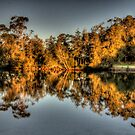 Just Reflecting - Narrabeen Lakes , Sydney - The HDR Experience by Philip Johnson