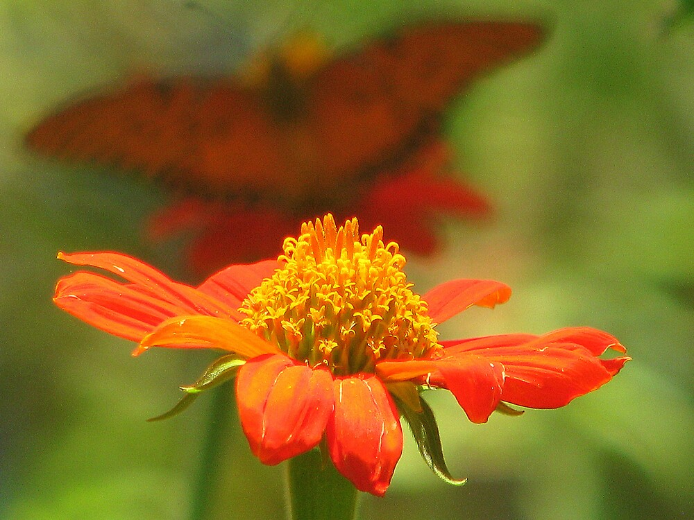 Dreaming of Butterflies by DottieDees