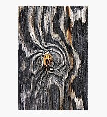 Wood knot .3 Photographic Print