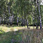 Birch Grove by magneta