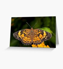 Little Pearl Crescent Butterfly Greeting Card