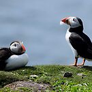 Puffins by Rob Parsons (AKA Just a Walker with a Camera)
